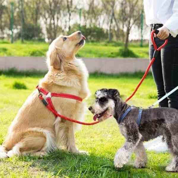 疫情期间可以在小区遛狗吗