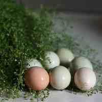 三月三煮鸡蛋是什么菜