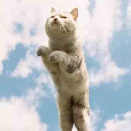 """胖猫走路突然起飞360度空翻  网友:""""深藏不露的汪星人"""""""