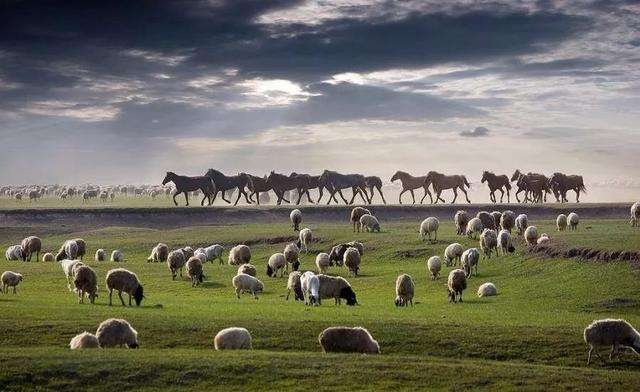"""蒙古國正式啟動3萬只羊捐贈程序  """"3萬只羊""""成為中蒙友誼佳話"""