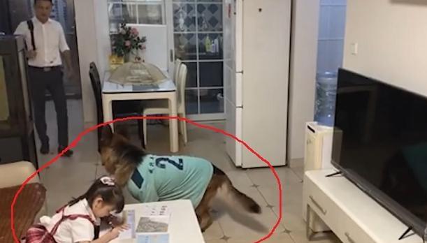 狗子听到家长进门提醒女孩写作业,狗子帮女孩监听望风家长-第2张图片-免单网