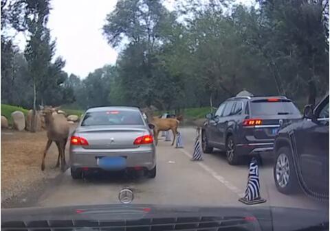 游客疑似给动物喂口罩警方通报,动物园喂食口罩-第1张图片-免单网