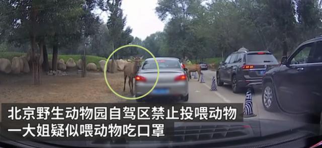 游客疑似给动物喂口罩警方通报,动物园喂食口罩-第2张图片-免单网
