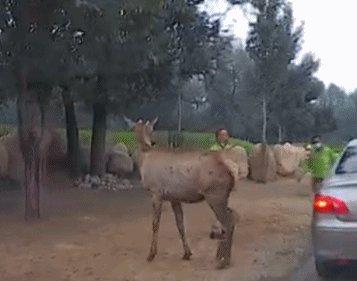 游客疑似给动物喂口罩警方通报,动物园喂食口罩-第3张图片-免单网