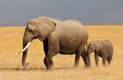 津巴布韦再现大象神秘死亡-第2张图片-免单网