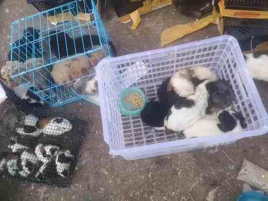 韵达回应数千只宠物滞留物流园死亡,河南漯河数千只宠物快递滞留物流园-第1张图片-免单网