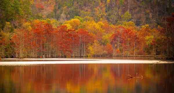 秋天要多吃什么食物,秋天要吃什么补身体-第1张图片-免单网
