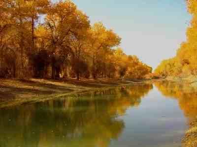 塔里木河胡杨林美如画