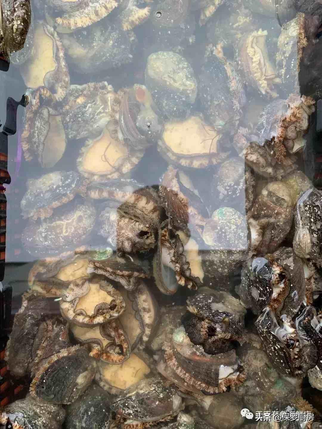 带你见识:贝壳类和螺类海鲜种类!这些海鲜你认识多少呢?