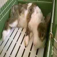 兔子可以喝水吗(兔子到底能不能喝水)