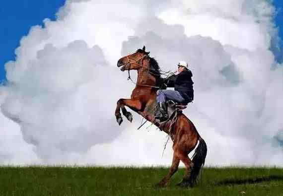 初学者怎么骑马(新手骑马的要点,让你能迅速地策马奔腾)