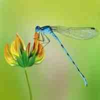 蜻蜓的生活习性(蚊子天生的天敌,环境的检测专家——蜻蜓)