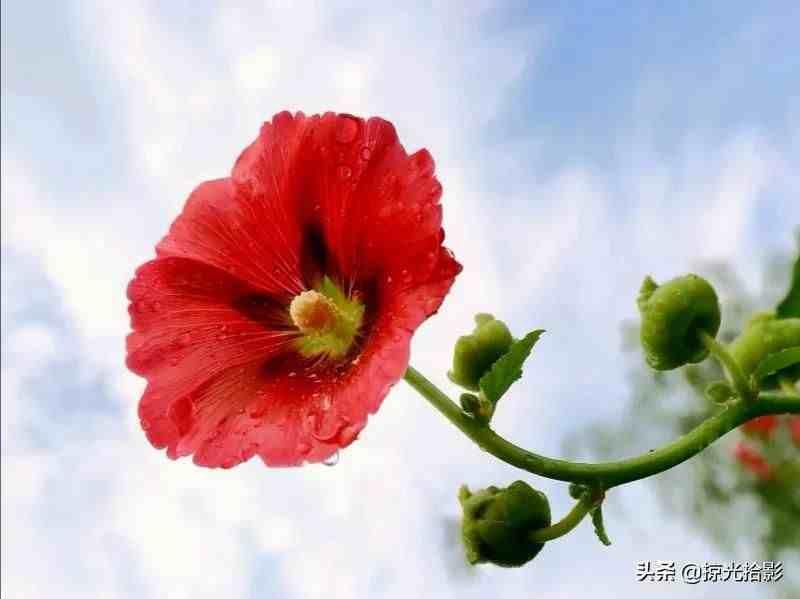 拍摄花卉令人快乐,一枝独秀不容错过