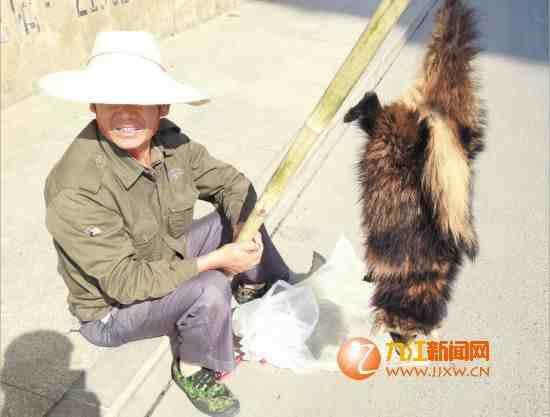 """小贩路边叫卖像狐狸的""""山狸"""" 它到底是什么?"""
