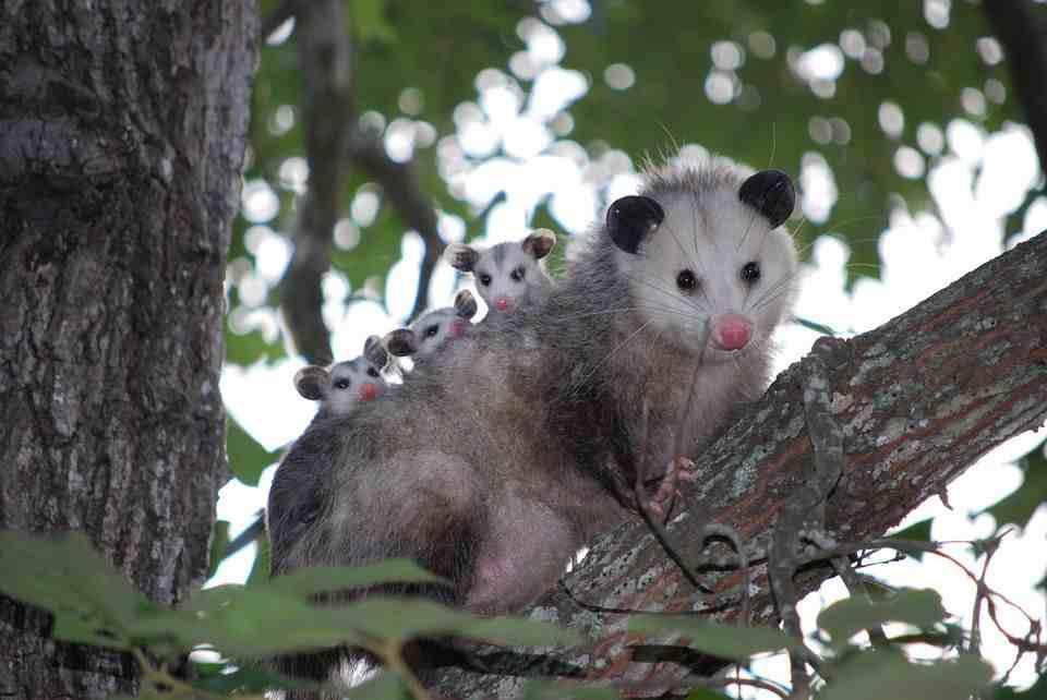 各种动物尾巴的作用,袋鼠相当于随身揣了个凳子