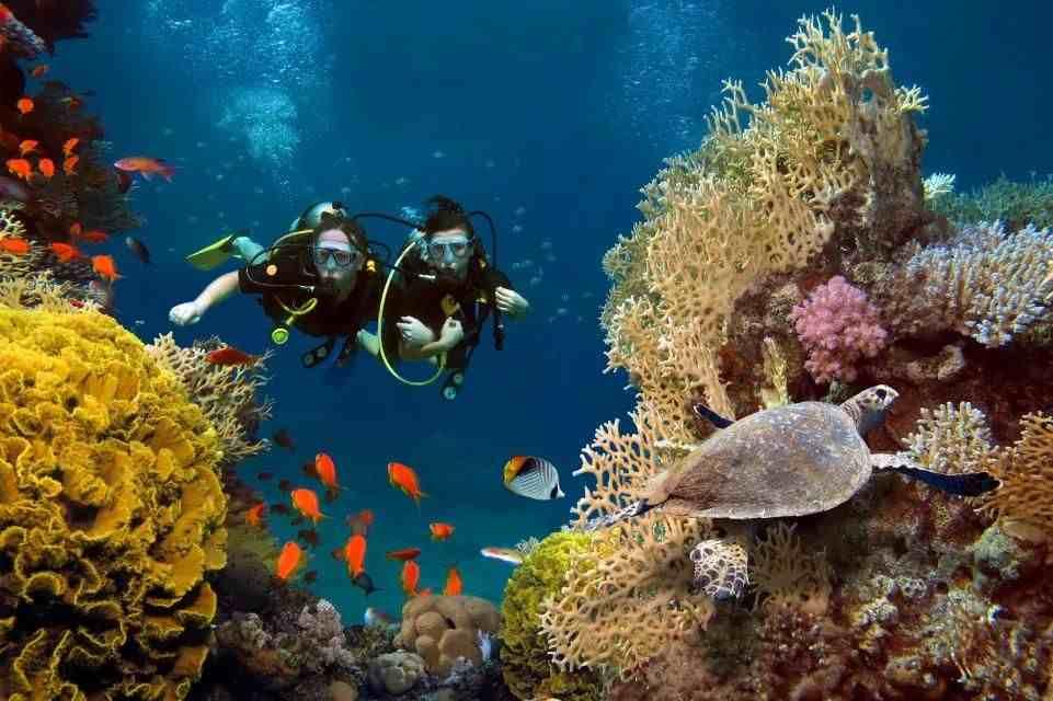 珊瑚是生物吗(珊瑚,是植物、矿物还是动物?)