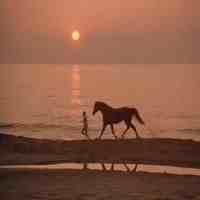 马的电影(这12部关于马的电影)