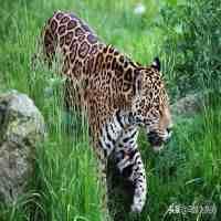 中国稀有动物(中国有哪些濒临灭绝的珍稀动物)