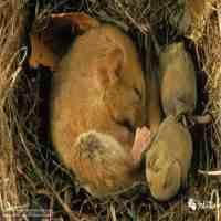 冬眠的动物有哪些(冬眠动物知多少?)