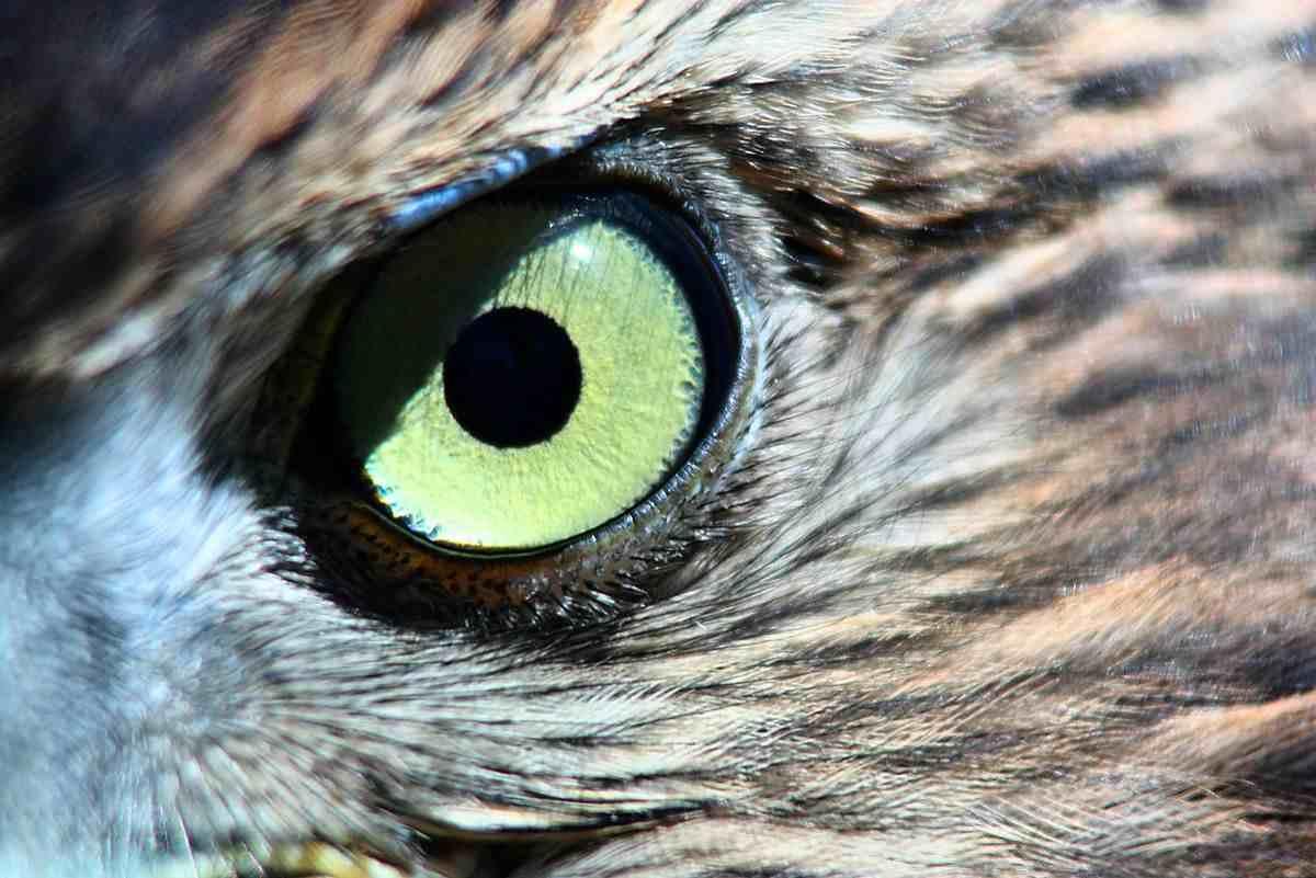 盘点:我们哪些仿生学科技是从动物身上得到的启发