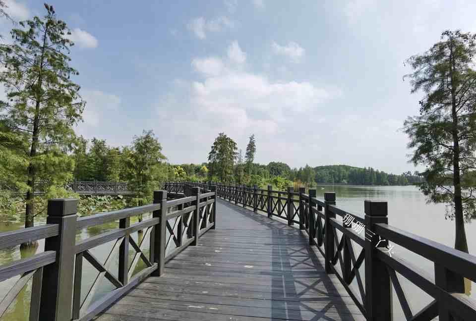 """广州闹市有个""""湖中小岛"""",成小鸟天堂,吸引大量摄影发烧友"""
