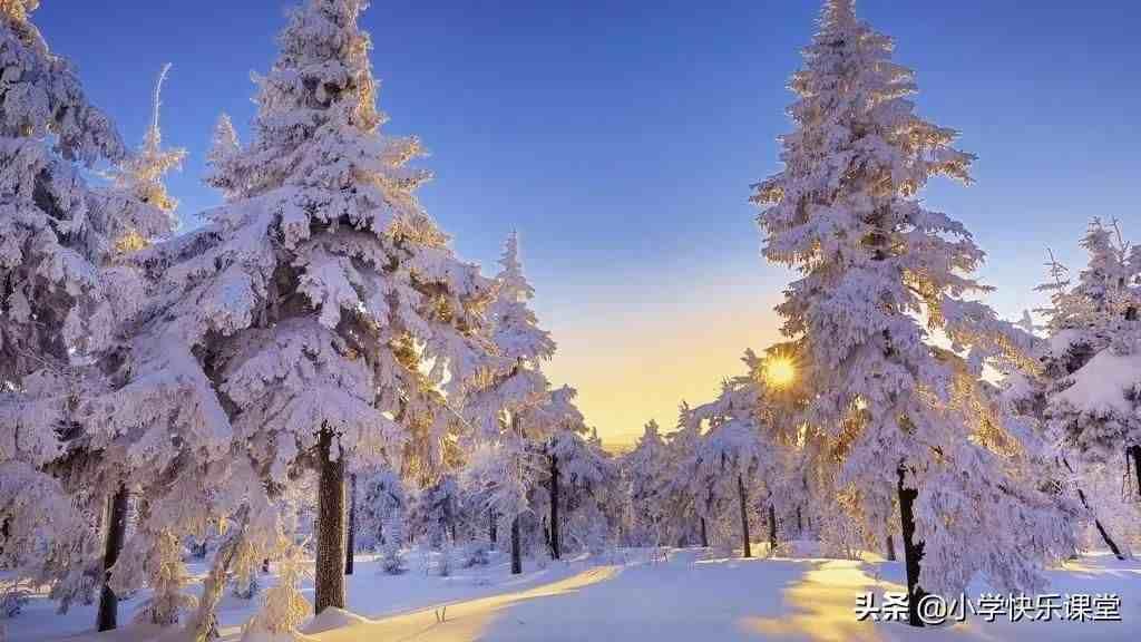 寒冷的冬天——写景小学生日记周记优秀写景作文600字