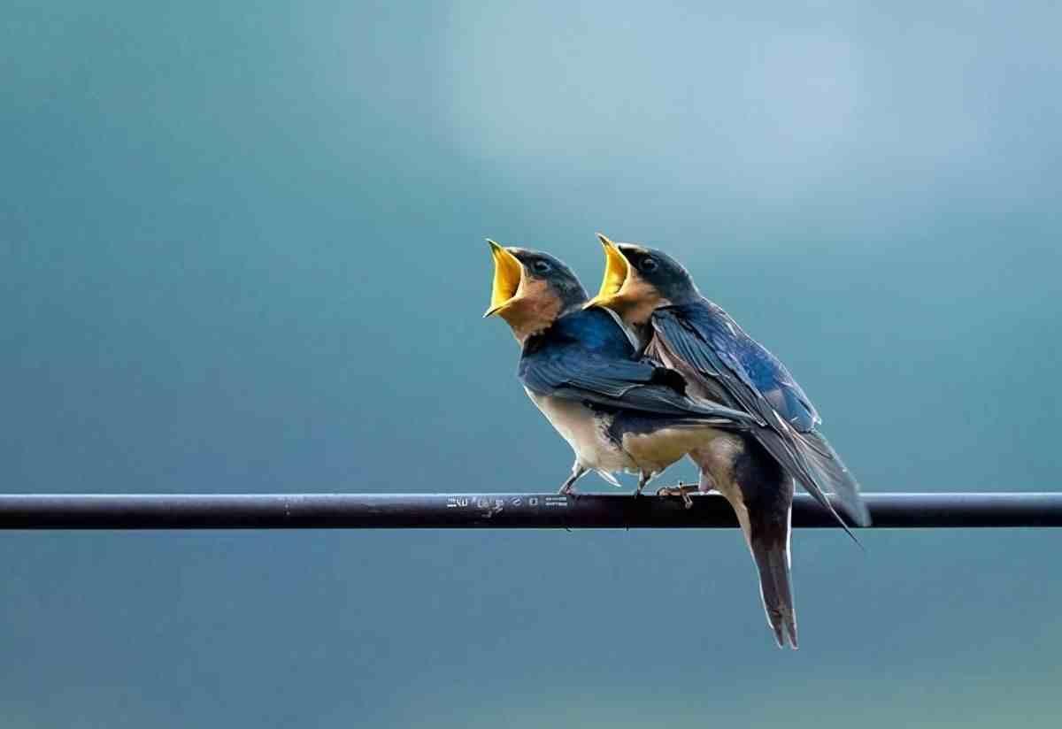 为什么小鸟站在高压线上不会触电