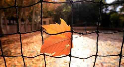 写景作文:描写秋天的校园作文十篇