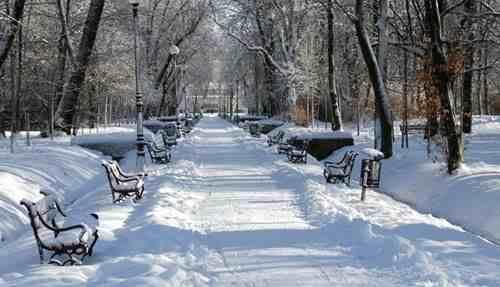 描写冬天景色的作文(10篇关于冬天来了的作文) 投稿 第4张