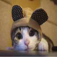 布偶猫的大概价格呢(最流行的5种猫价格你都了解吗?)