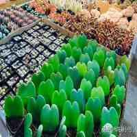 北京花卉批发市场(北京花卉市场哪个最好)