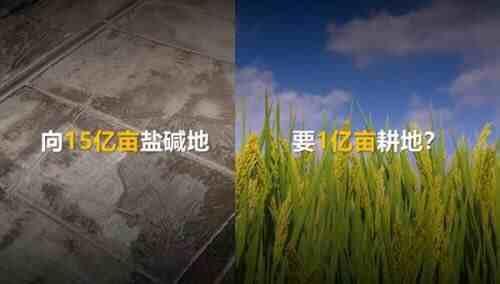 华为联手袁隆平,盐碱地上要变出上亿亩耕地!