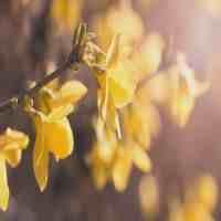 立春节气的诗词(春天,你好!立春诗词15首)