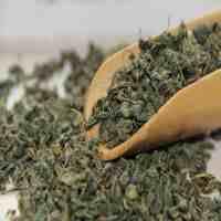 新疆罗布麻茶(新疆罗布麻茶能降血压吗?)
