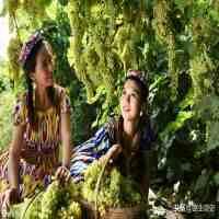 新疆维族(维吾尔族是怎样来到新疆的?)