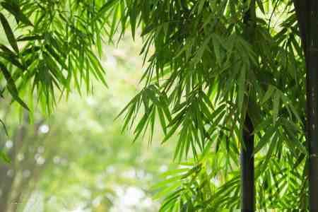 竹类代表哪一类人