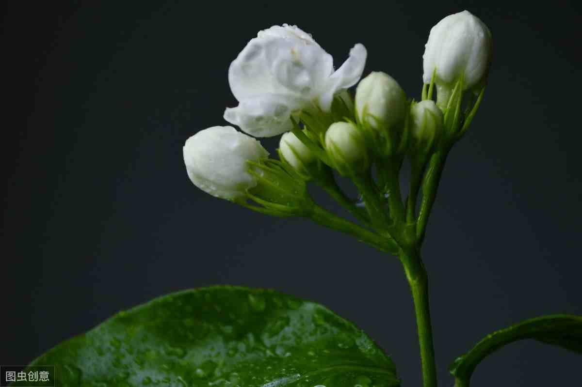 花儿为什么这样香(花朵为什么会散发香味)