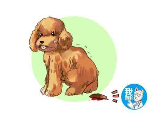 狗狗便血了怎么办?找出原因是关键,及时治疗避免病情延误