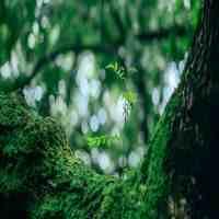 苔藓植物(苔藓你认识几种?)