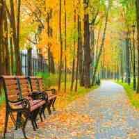描写秋天的词语(小学作文素材积累描写秋天的成语)