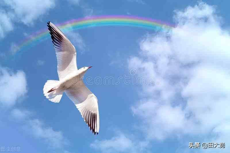 飞翔的鸟;关于飞翔的小鸟游戏