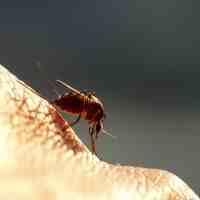 清香木驅蚊草真的能驅蚊嗎(驅蚊效果最好的植物)