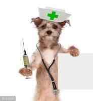 狂犬病传播途径(狂犬病的传播途径有哪些?)